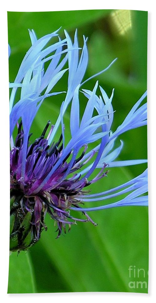 Blue Hand Towel featuring the photograph Cornflower Centaurea Montana by Diane Greco-Lesser
