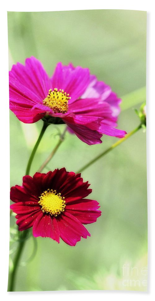 Pink Hand Towel featuring the photograph Cosmos by Angela Rath