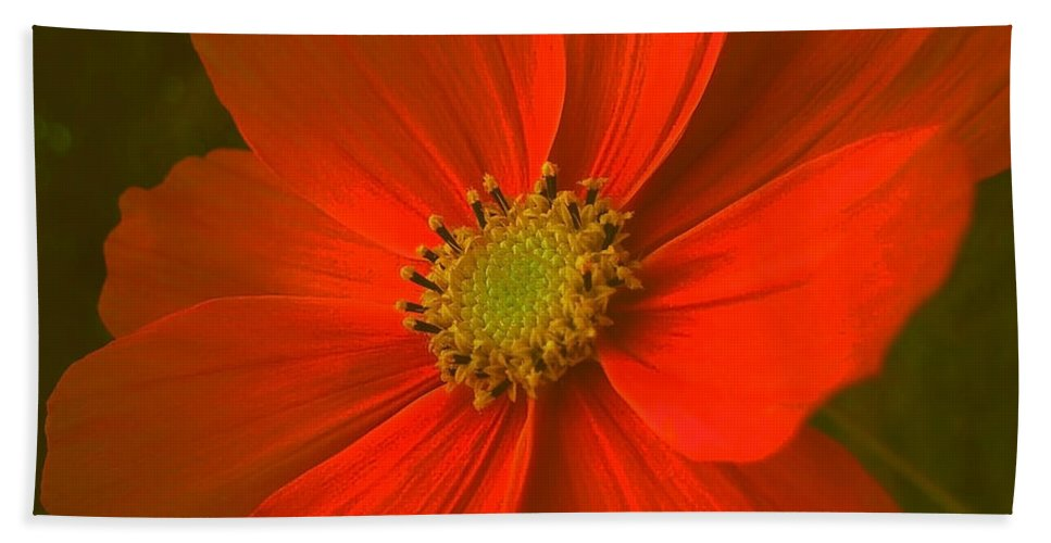 Flower Bath Sheet featuring the photograph Cosmos by Juergen Weiss