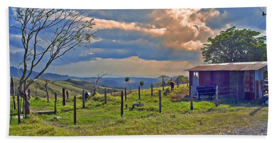 Cow Hand Towel featuring the photograph Costa Rica Cow Farm by Madeline Ellis