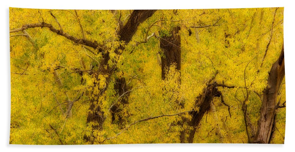 Autumn Bath Sheet featuring the photograph Cottonwood Fall Foliage Colors Abstract by James BO Insogna