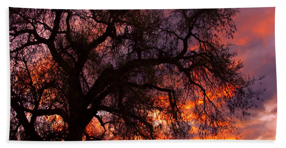 Silhouette Hand Towel featuring the photograph Cottonwood Sunset Silhouette by James BO Insogna