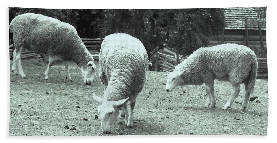 Sheep Hand Towel featuring the photograph Counting Sheep by Ian MacDonald