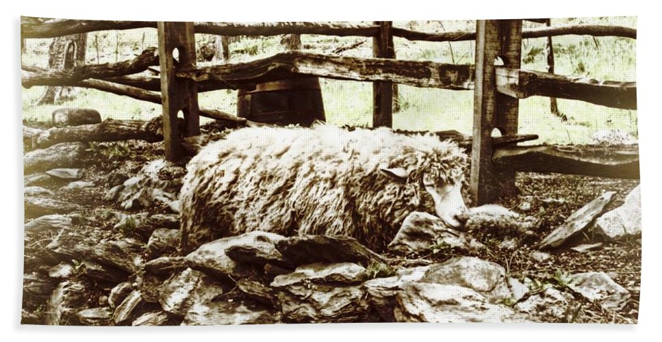 Sheep Bath Sheet featuring the photograph Counting Sheep by JAMART Photography