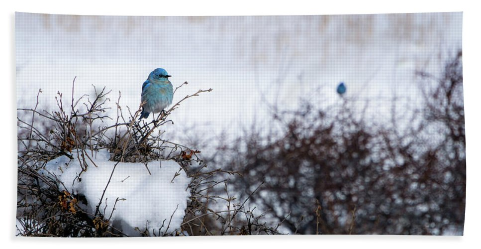 Artisans Bath Sheet featuring the photograph Couple Chilly Bluebirds by Cary Leppert