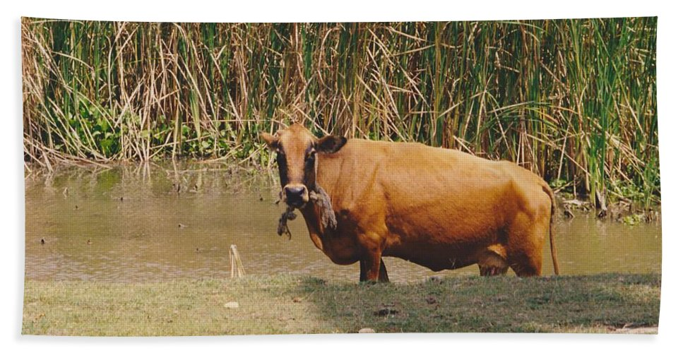 Animal Hand Towel featuring the photograph Cow In The Field by Michelle Powell