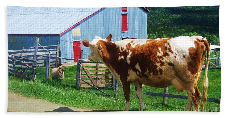 Photograph Cow Sheep Barn Field Newfoundland Hand Towel featuring the photograph Cow Sheep And Bicycle by Seon-Jeong Kim