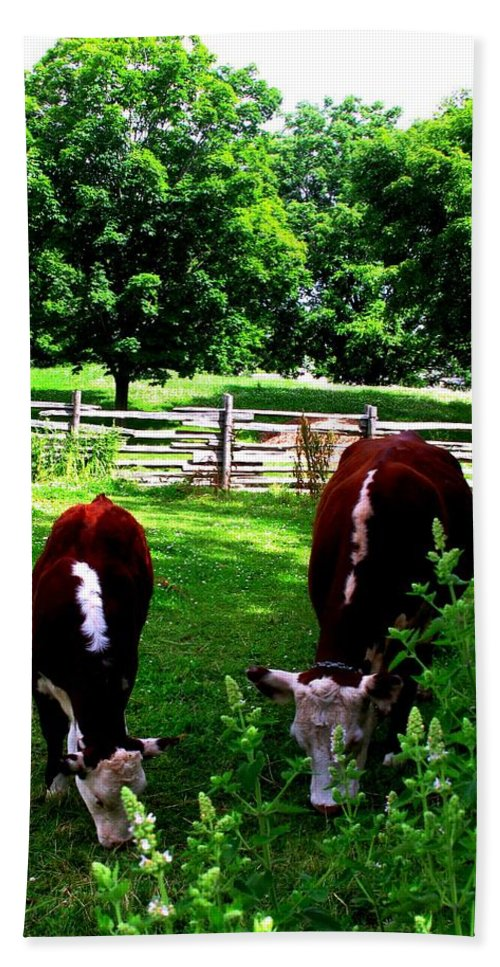 Cows Bath Towel featuring the photograph Cows Grazing by Ian MacDonald