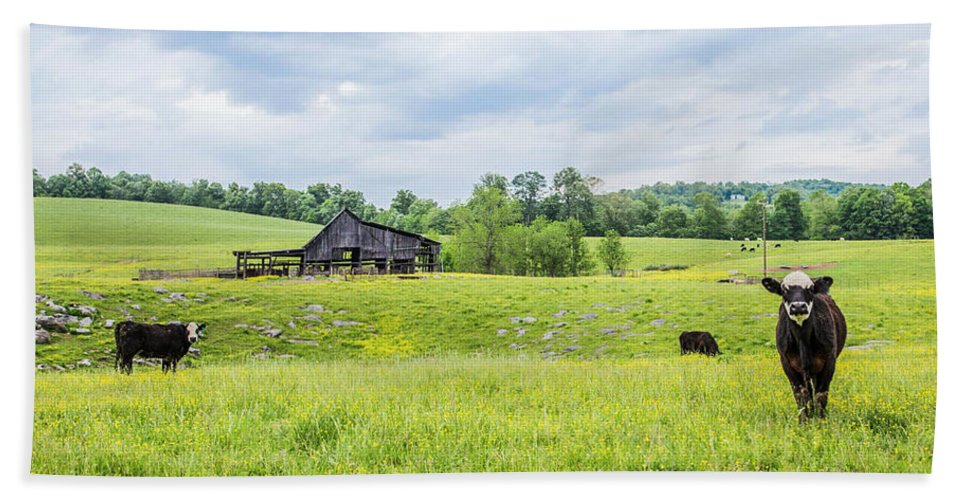 Cows Hand Towel featuring the photograph Cows In The Country by Lisa Lemmons-Powers