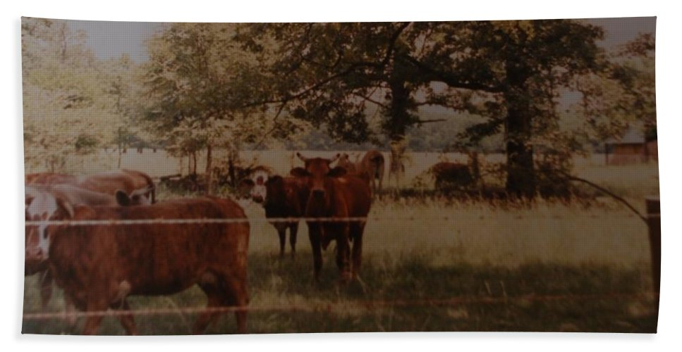 Cows Hand Towel featuring the photograph Cows by Rob Hans