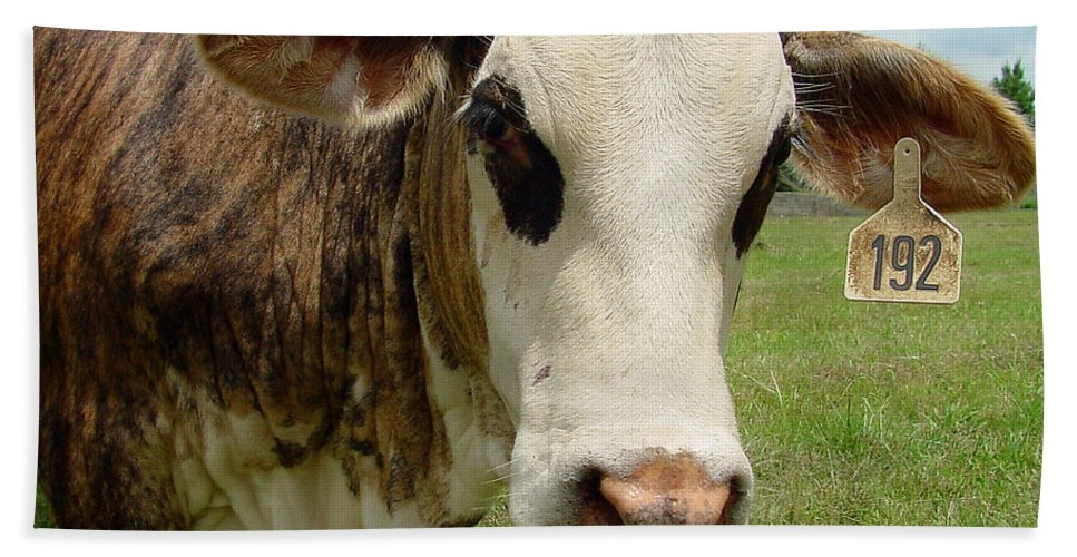 Cow Hand Towel featuring the photograph Cows8937 by Gary Gingrich Galleries