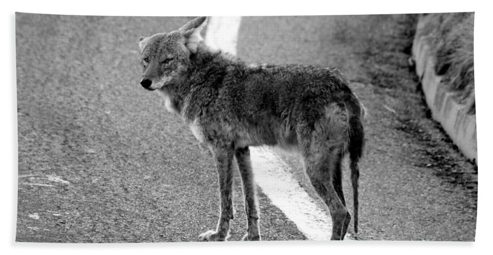 Coyote Bath Towel featuring the photograph Coyote On The Road by David Lee Thompson