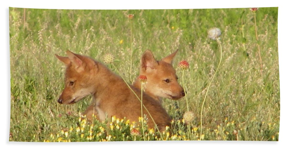 Pup Hand Towel featuring the photograph Coyote Pups by Gale Cochran-Smith