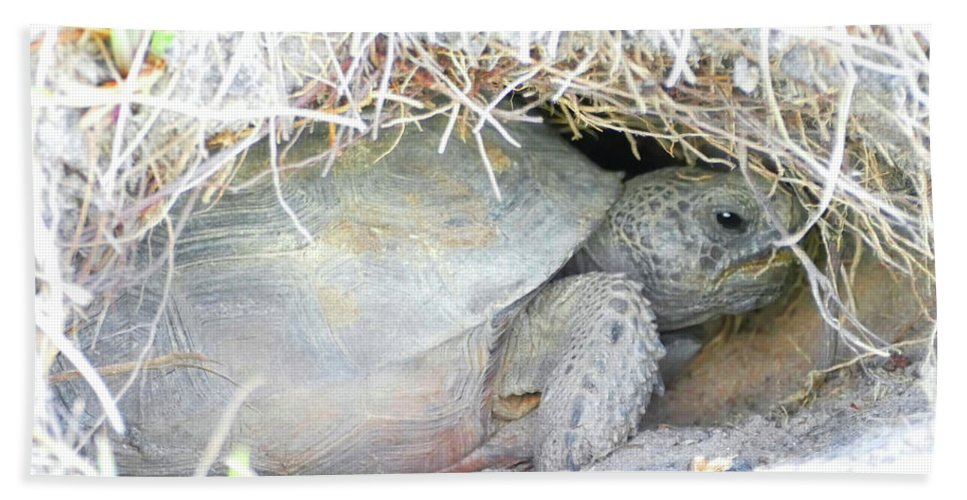 Gopher Tortoise Bath Sheet featuring the photograph Cozy Burrow by Sally Sperry