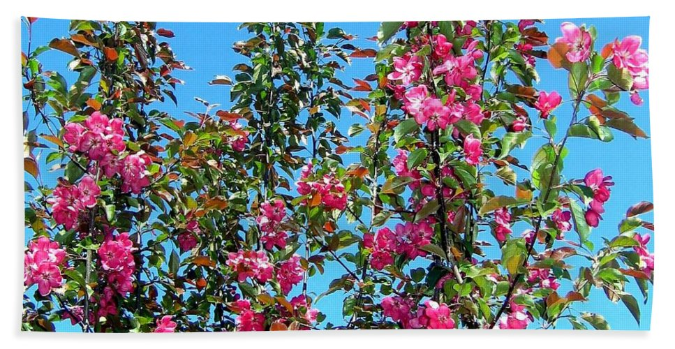 Crab Apple Blossoms Bath Towel featuring the photograph Crab Apple Blossoms by Will Borden