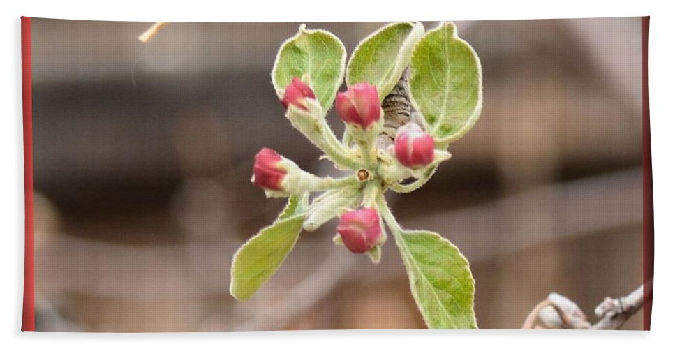 Garden Hand Towel featuring the photograph Crab Apple Buds by Wendy Fox