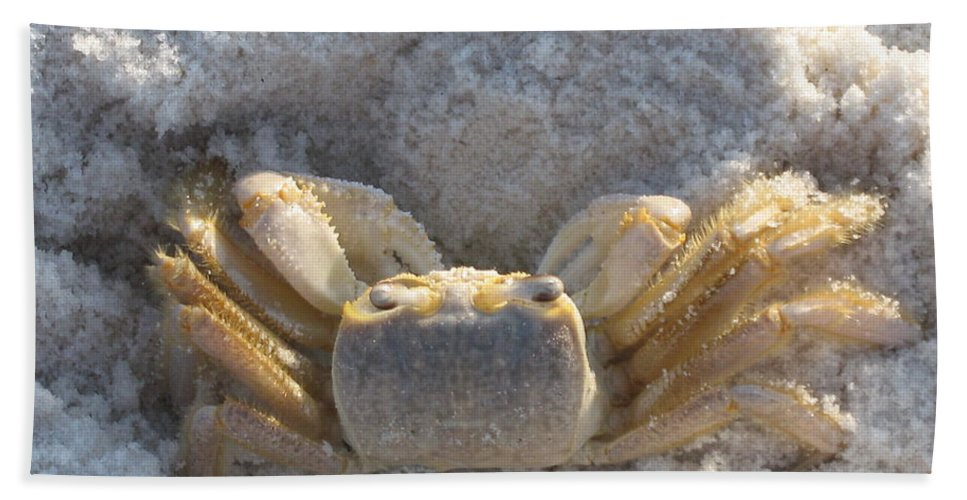 Crab Hand Towel featuring the photograph Crab On The Beach by Christiane Schulze Art And Photography