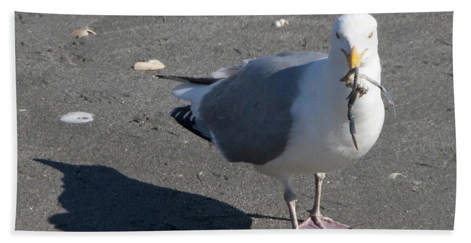Seagull Bath Sheet featuring the photograph Crab Plate by Steven Natanson
