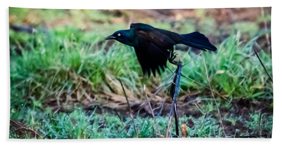 Jan Holden Bath Sheet featuring the photograph Grackle In The Morning by Jan M Holden