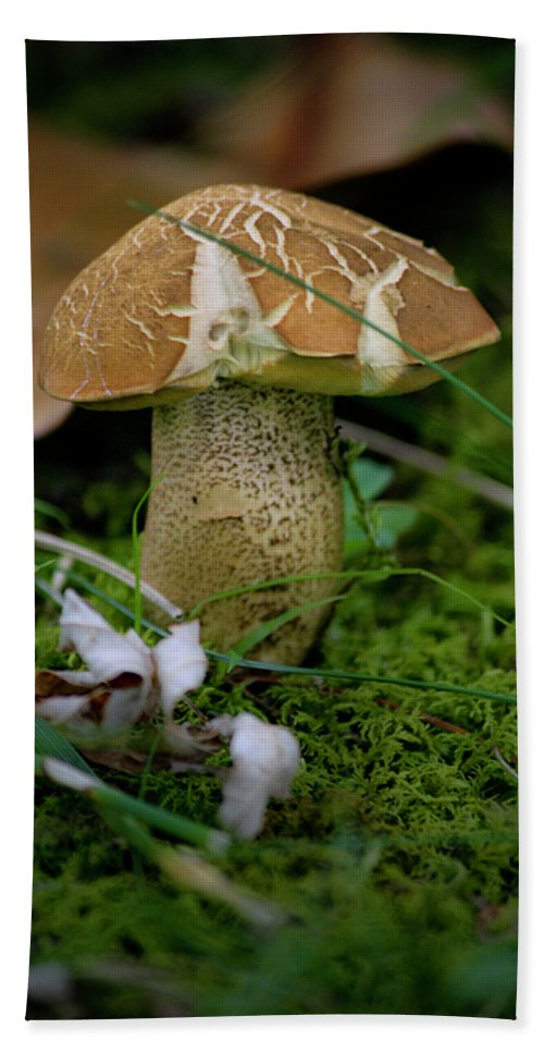 Fungus Hand Towel featuring the photograph Crackles by Teresa Mucha