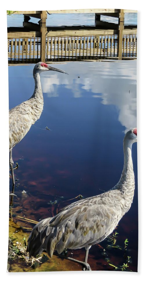 Birds Bath Sheet featuring the photograph Cranes At The Lake by Zina Stromberg