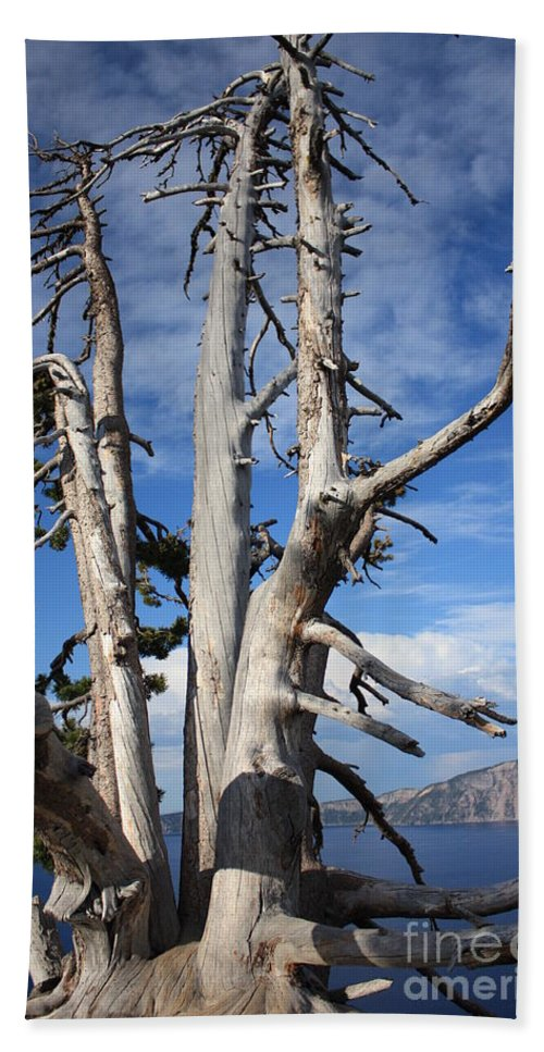 Tree Bath Towel featuring the photograph Crater Lake Tree by Carol Groenen