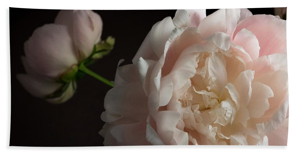 Peony Bath Sheet featuring the photograph Cream And Pink by Don Spenner