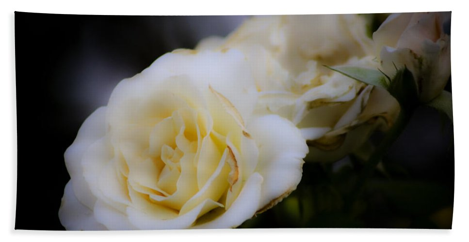Rose Bath Towel featuring the photograph Creamy Dreamy Rose by Teresa Mucha
