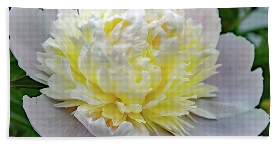 Festiva Maxima Double Peony Bath Sheet featuring the photograph Creamy Petals - Double Peony by Cindy Treger