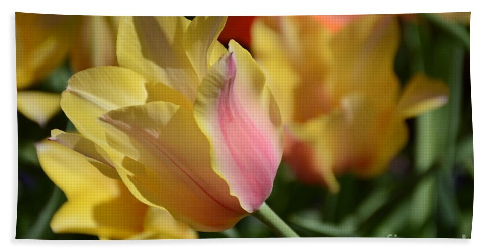 Hand Towel featuring the painting Creamy Yellow Tulip by Constance Woods