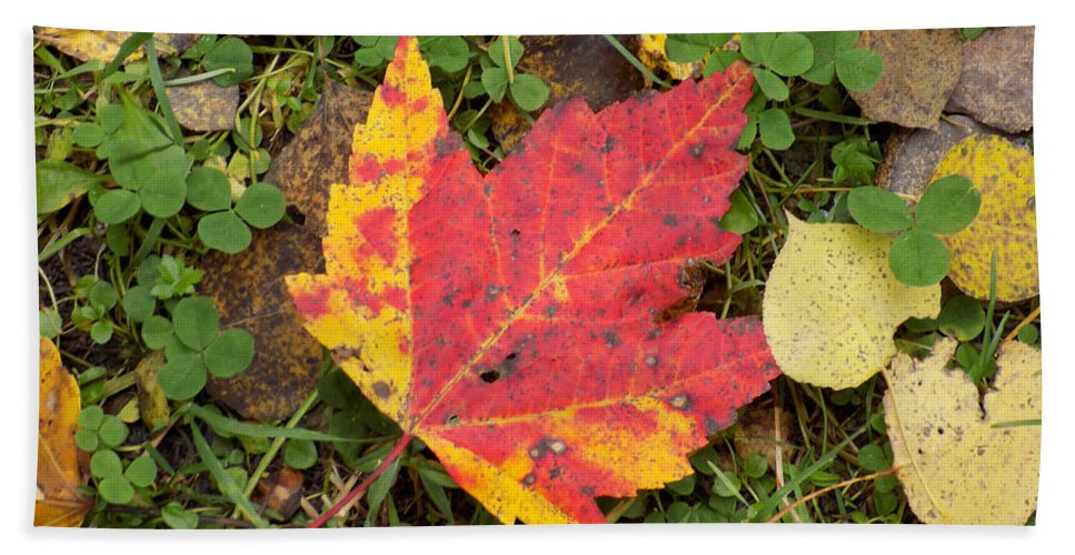 Maple Leaf Hand Towel featuring the photograph Crimson And Clover by William Tasker