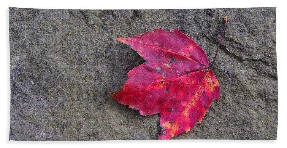Autumn Bath Sheet featuring the photograph Crimson by JAMART Photography