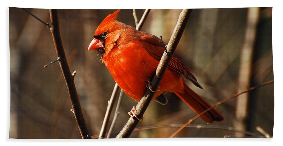Wildlife Bath Sheet featuring the photograph Crimson King by Lois Bryan