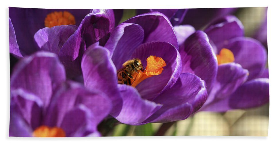 Bee Bath Sheet featuring the photograph Crocus And Bee by Marilyn Hunt