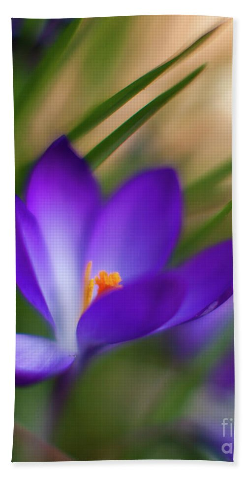 Crocus Bath Sheet featuring the photograph Crocus Light by Mike Reid