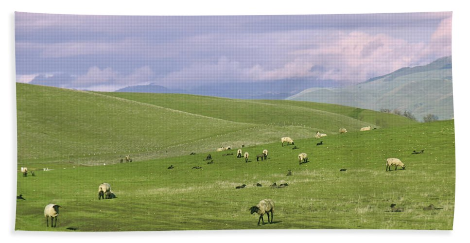 Landscape Hand Towel featuring the photograph Cross Road Sheep by Karen W Meyer