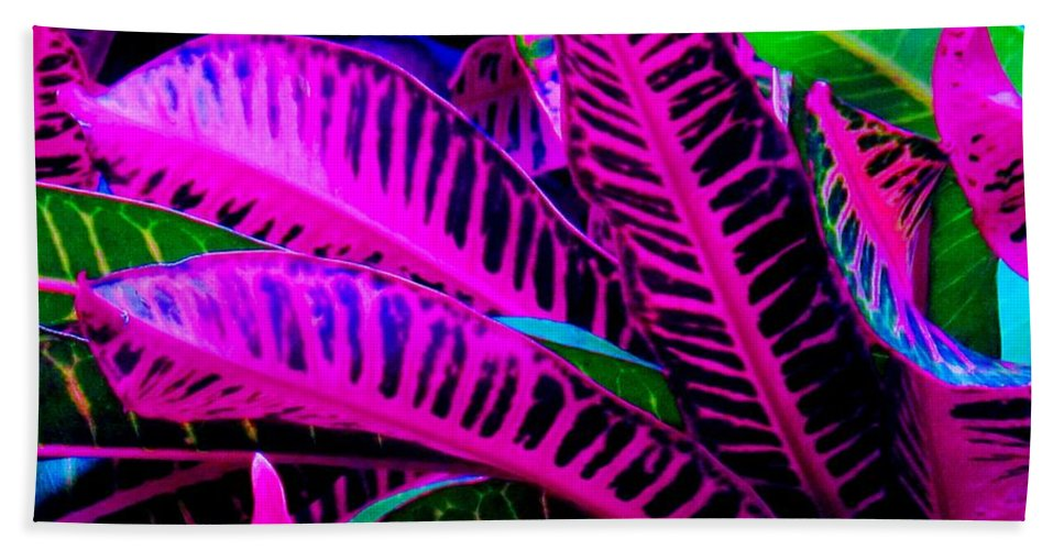 Croydon Plants Purple Green Hand Towel featuring the photograph Croton by Ian MacDonald