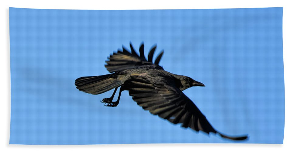 Crow Flyby Hand Towel featuring the photograph Crow Flyby by William Tasker