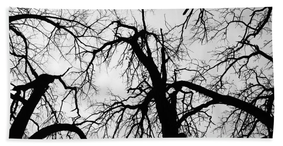 Trees Bath Sheet featuring the photograph Crowding by Jamie Lynn