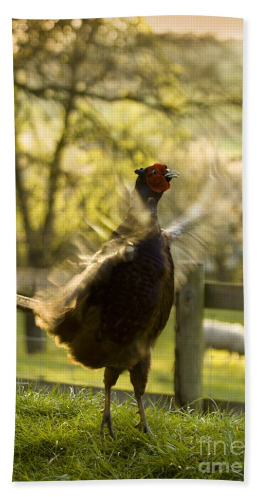 Pheasant Bath Sheet featuring the photograph Crowing by Angel Ciesniarska