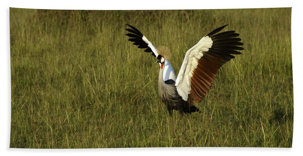 Africa Hand Towel featuring the photograph Crowned Crane Display by Michele Burgess
