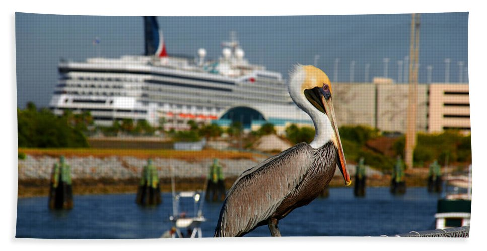 Pelican Hand Towel featuring the photograph Cruising Pelican by Susanne Van Hulst