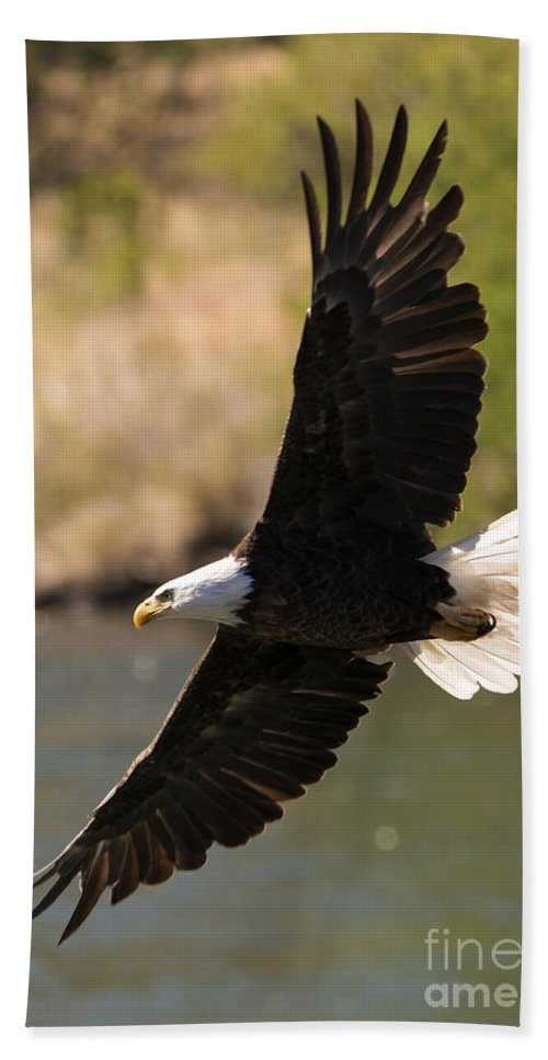 American Bald Eagle Hand Towel featuring the photograph Cruising the River by Mike Dawson