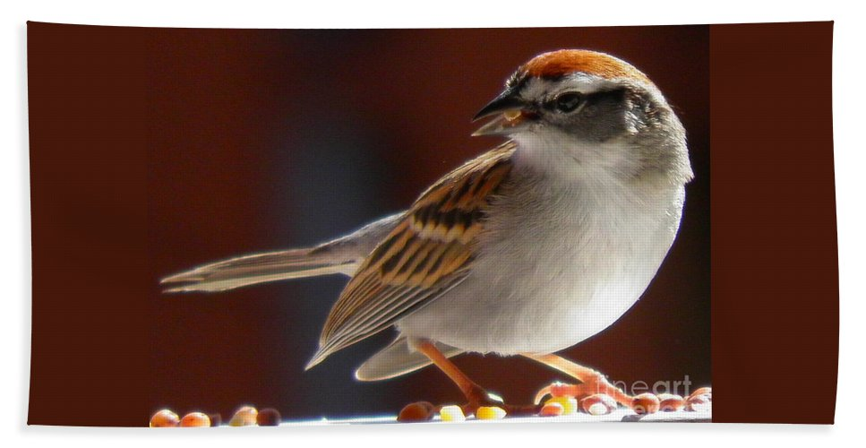 A Hungry Chipping Sparrow Bath Sheet featuring the photograph A Hungry Chipping Sparrow by Earl Williams Jr