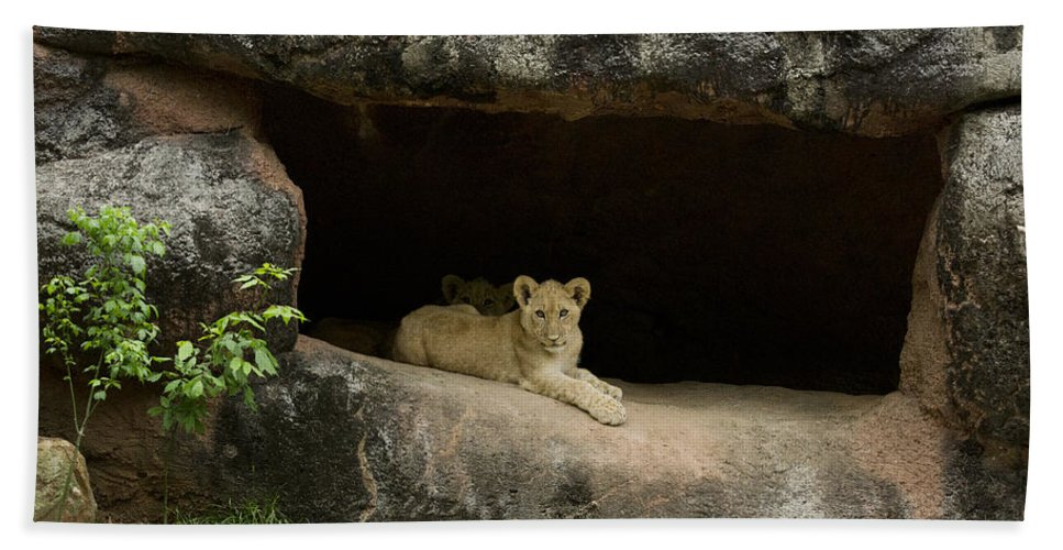 Africa Bath Sheet featuring the photograph Cubs In Cave by Linda D Lester