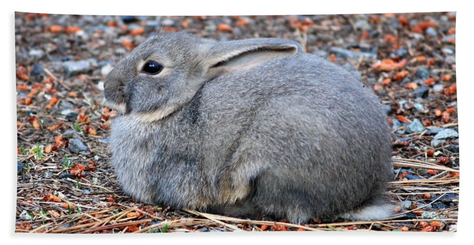 Rabbit Bath Sheet featuring the photograph Cuddly Campground Bunny by Carol Groenen