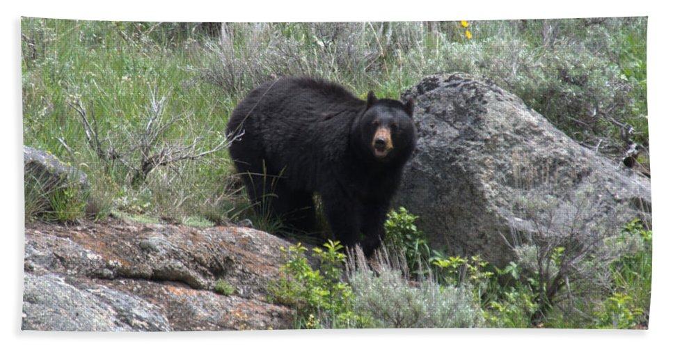 Black Bear Bath Towel featuring the photograph Curious Black Bear by Frank Madia