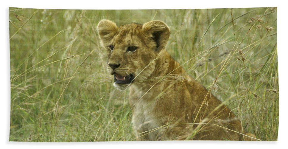 Africa Hand Towel featuring the photograph Curious Cub by Michele Burgess