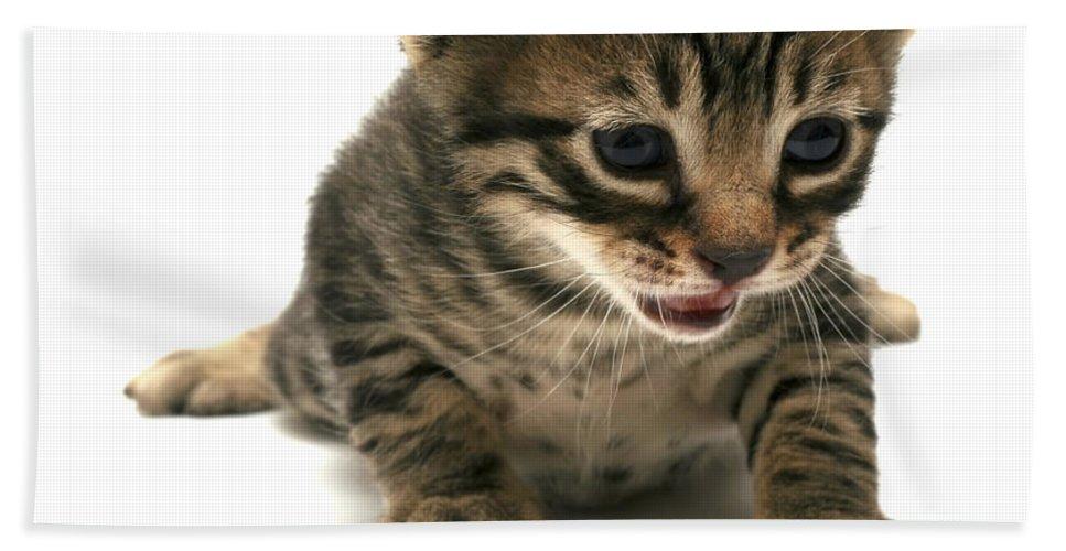Cat Hand Towel featuring the photograph Curious Kitten by Yedidya yos mizrachi