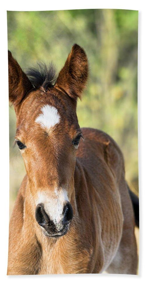 Wild Horses Bath Towel featuring the photograph Curious Little Colt by Saija Lehtonen